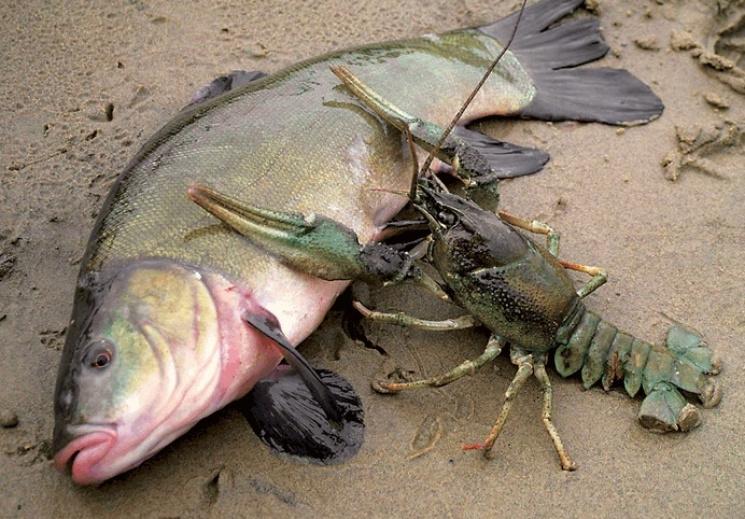 Закарпатцям нагадали, скільки риби і раків дозволяється виловити за добу