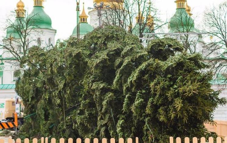 На столичній Софійській площі встановили головну ялинку країни (ФОТО)