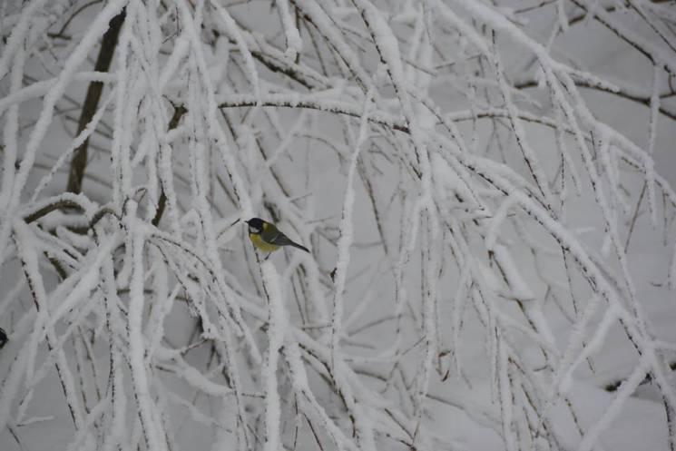 """Зимова казка: чарівні світлини Національного парку """"Синевир"""" (фото)"""