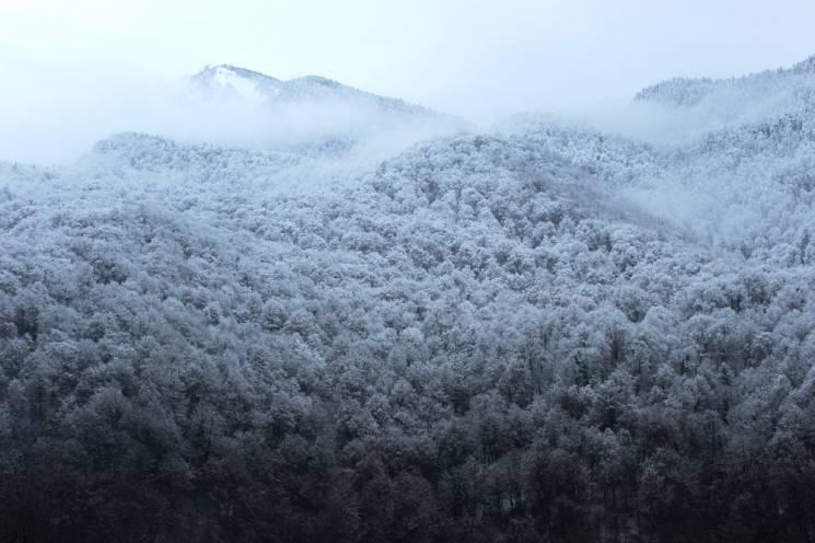 Увага! На території Закарпатської області та по м. Ужгороду очікуються тумани