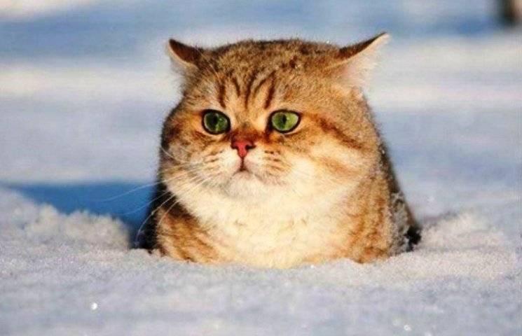 """Як коти хизуються справжніми зимовими """"прикидами"""" (ФОТО)"""