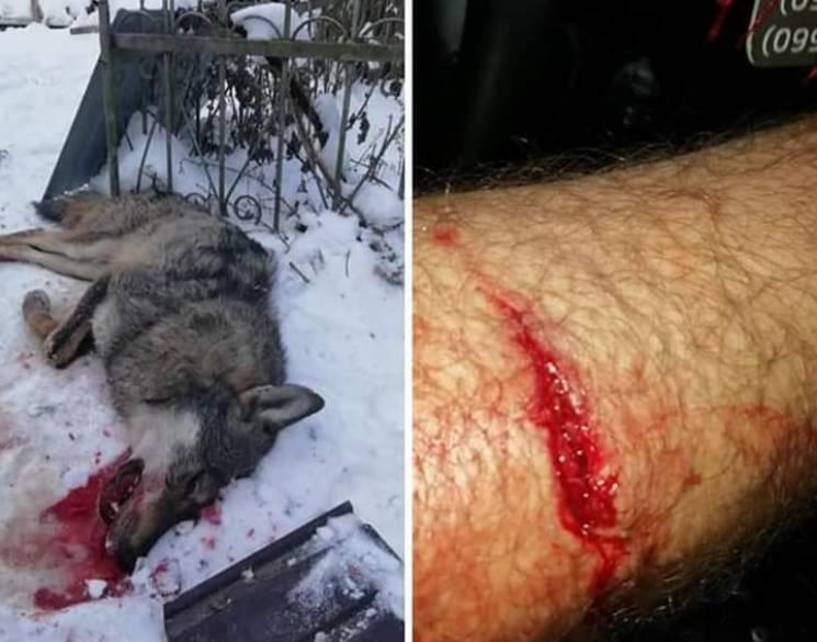 На Тернопільщині вовк покусав двох чоловіків