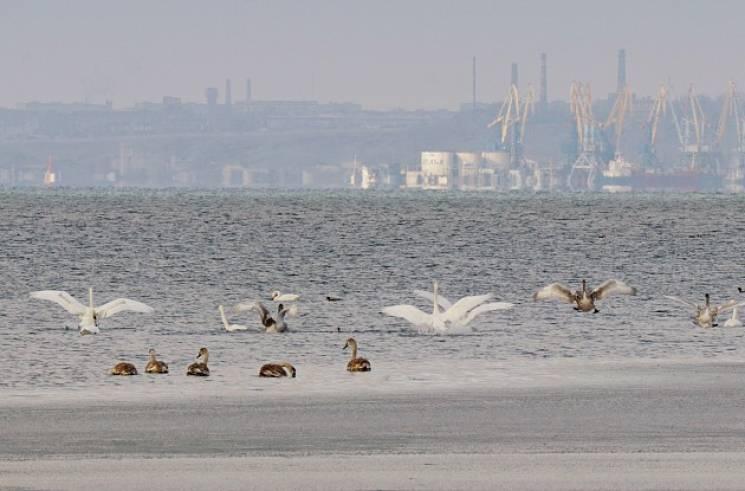 Як птахи зустріли зиму у Бердянську (ФОТО)