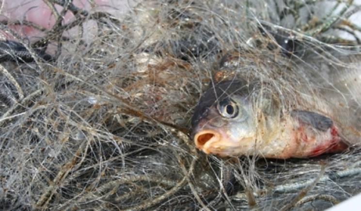 Тернопільські рибоохоронці піймали браконьєрів