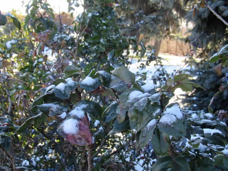 Хмари, сніг і дощ: Якої погоди чекати у Черкасах 5 грудня