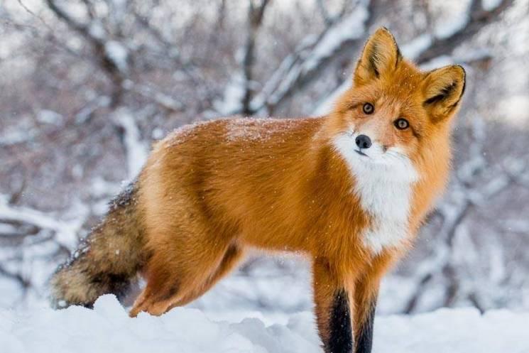 Львів'ян просять допомогти прогодувати врятованих тварин