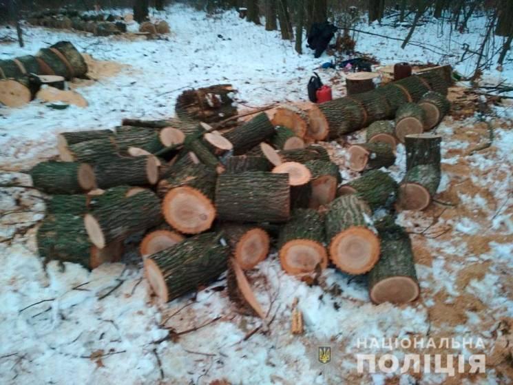 На Полтавщині копи викрили лісорубів-браконьєрів (ФОТО)