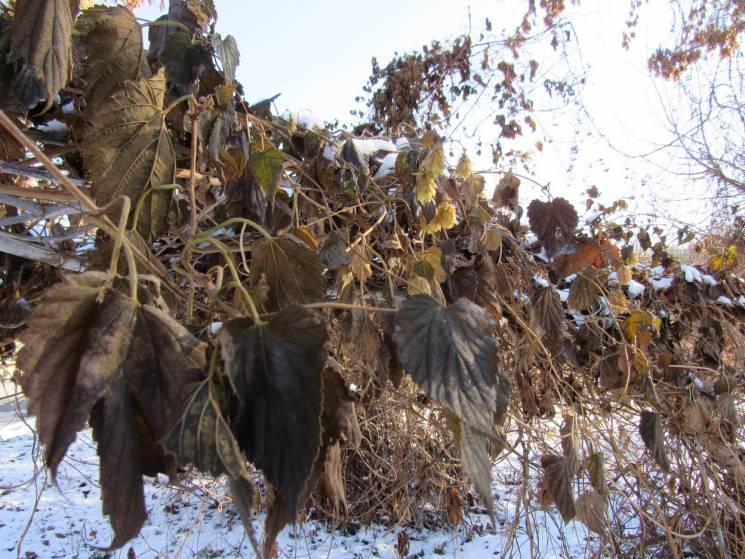 """""""Сірий"""" день та нічний сніг: Якої погоди чекати у Полтаві 8 грудня"""