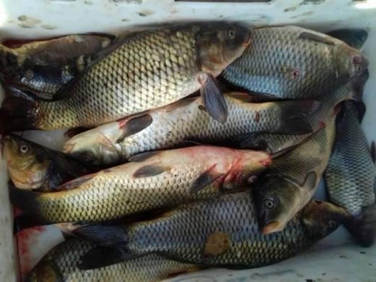 Рибоохоронці Хмельниччини в листопаді ви…