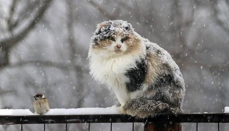 У п'ятницю Суми притрусить снігом, а в суботу світитиме сонце