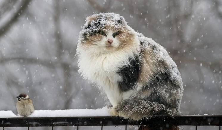 """Циклон Marielou: На вихідних Київ накриє мокрим снігом, дощем та нічним """"мінусом"""""""