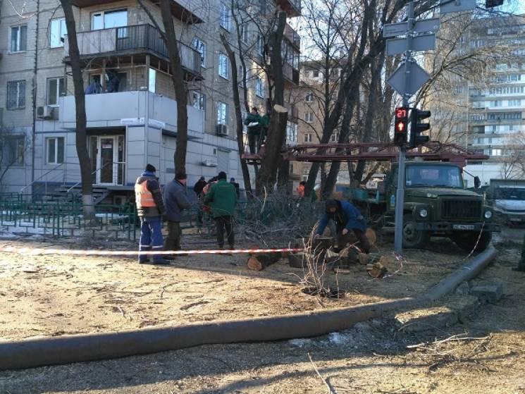 У центрі Дніпра комунальники масово пиляють дерева