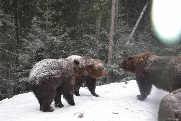 """Як у """"Синевирі"""" клишоногі жителі радіють снігу (ФОТО, ВІДЕО)"""