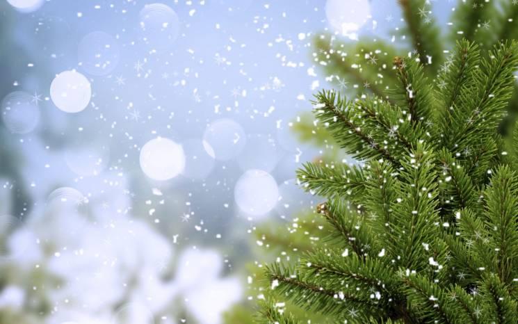 Купить елку в Киеве на новогодне-рождест…