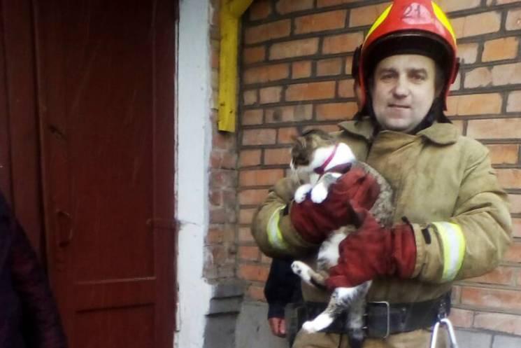 Франківські надзвичайники рятували кошеня