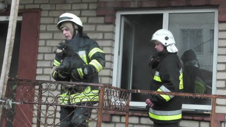 У Херсоні з потужної пожежі у двоповерхівці врятували котів, собак і морських свинок (ФОТО)