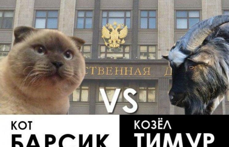 """На России кот Барсик """"оценил"""" перспективы козла Тимура на выборы в Госдуму"""
