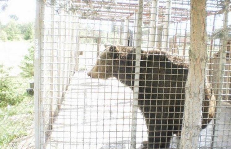 Вінницькі ведмеді купатимуться в басейні
