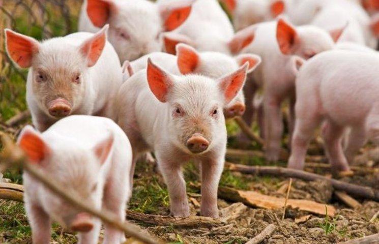 Беларусь запретила свинину из оккупированного Крыма
