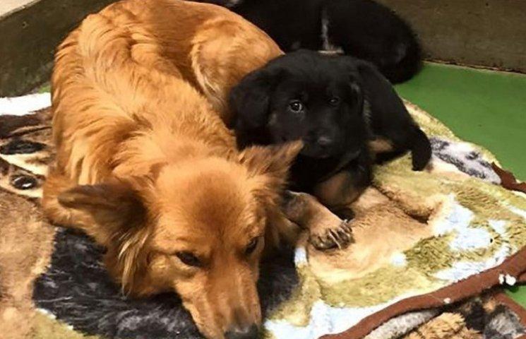 Как собака сбежала из клетки, чтобы успокоить чужих щенков