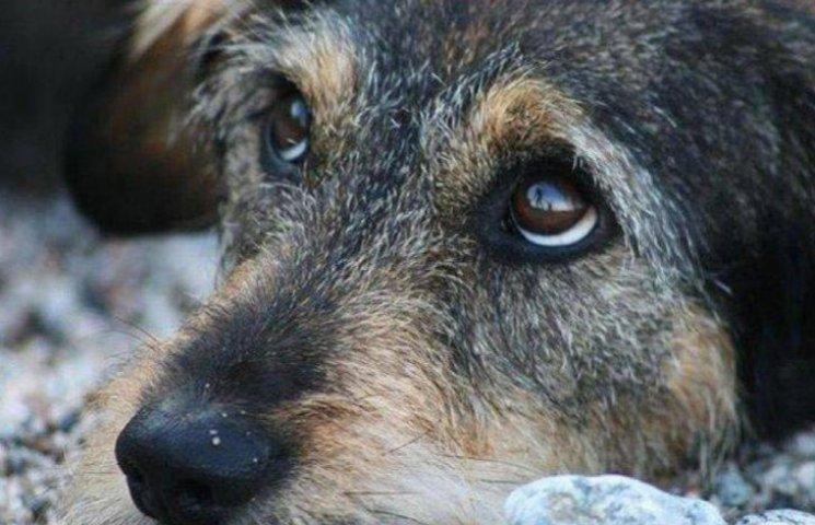 Как кот из АТО и обладатели браслетов спасают киевских собачек