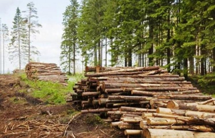 Закарпатські лісівники просять зупинити вирубку лісів