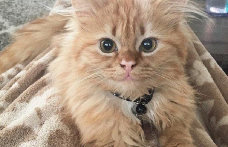 Як кошеня, якого взяли з притулку, постійно посміхається