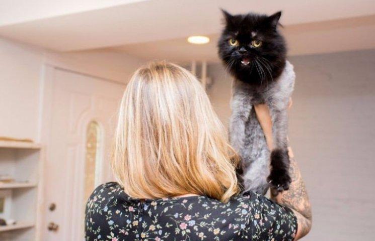 Як виглядають найпопулярніші коти інстаграму та їхні господарі