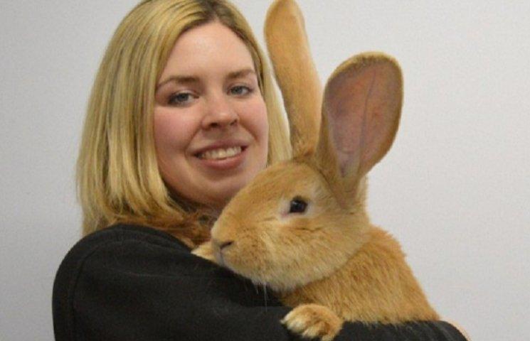 В Шотландии гигантский кролик ищет любящего владельца