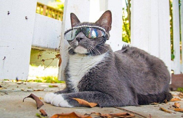 Як кіт Бублик, який змушений носити окуляри, підірвав соцмережі
