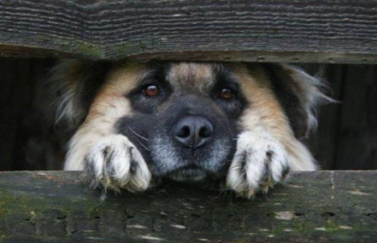 Бездомними собаками і котами зайнялася Хмельницька мерія