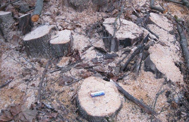 Двох мешканців Сумщини спіймали на незаконній заготівлі дров у лісосмузі