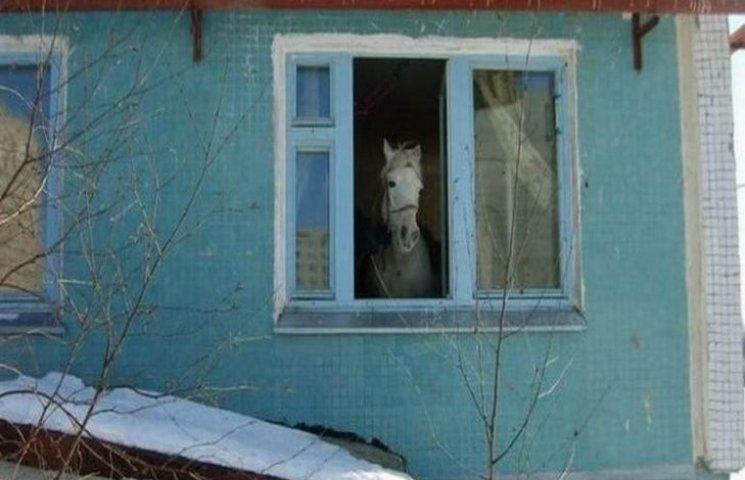 Підбірка ідіотизмів, які можна побачити у вікнах на Росії