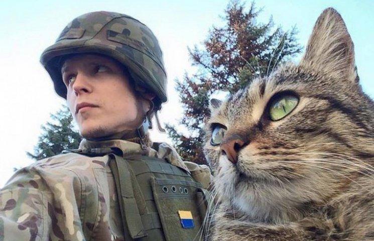 За что котам в АТО нужно поставить памятник-3