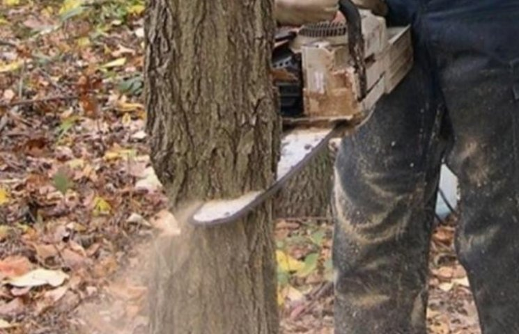 На Миколаївщині військових спіймали на незаконній вирубці дерев