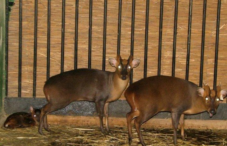 У Миколаївському зоопарку народилися перші в цьому році малюки