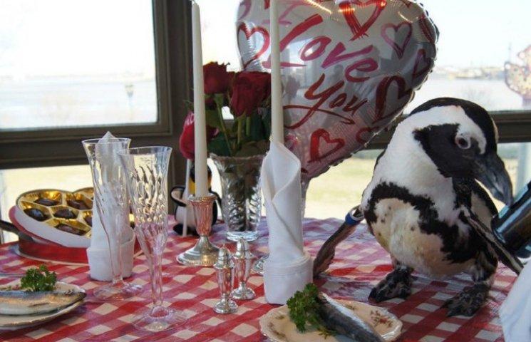 Как супруги пингвины, которые вместе уже 22 года, праздновали День влюбленных