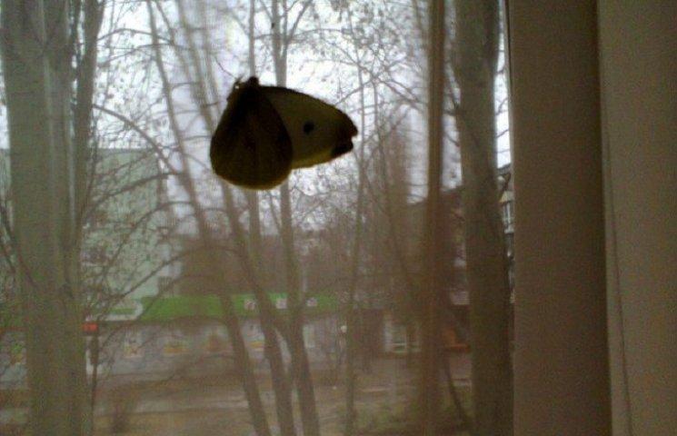 Через аномальне тепло останніх днів у Запоріжжі прокинулися метелики і тепер шукають прихисток в оселях містян