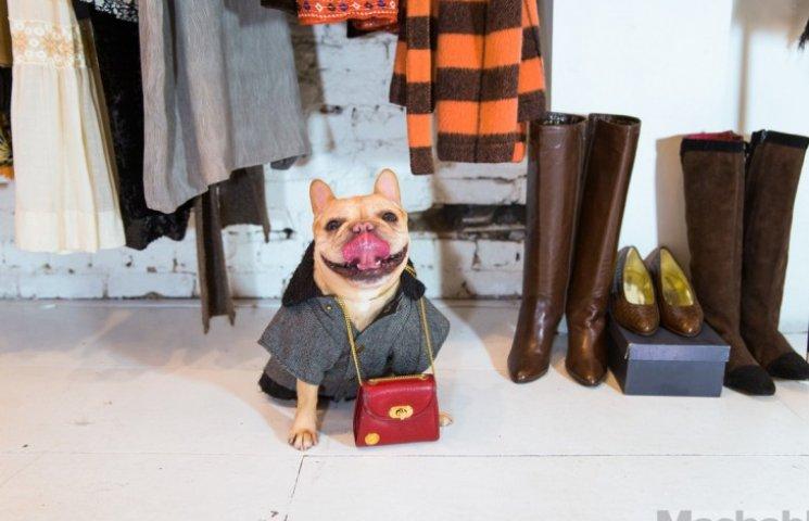 Французький собака, який вдягається модніше за Кардашіан, підірвав інтернет