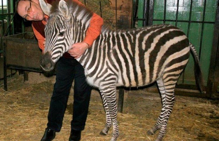 Миколаївський зоопарк виміняв у німців зебру