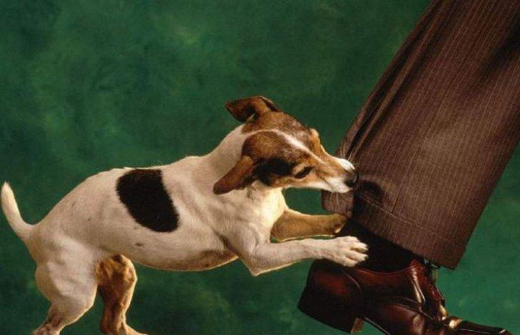 Безпритульні собаки напали на співробітника сумської мерії