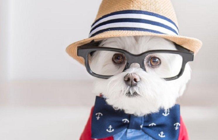 Болонка-хипстер стала самой модной собакой в Инстаграме