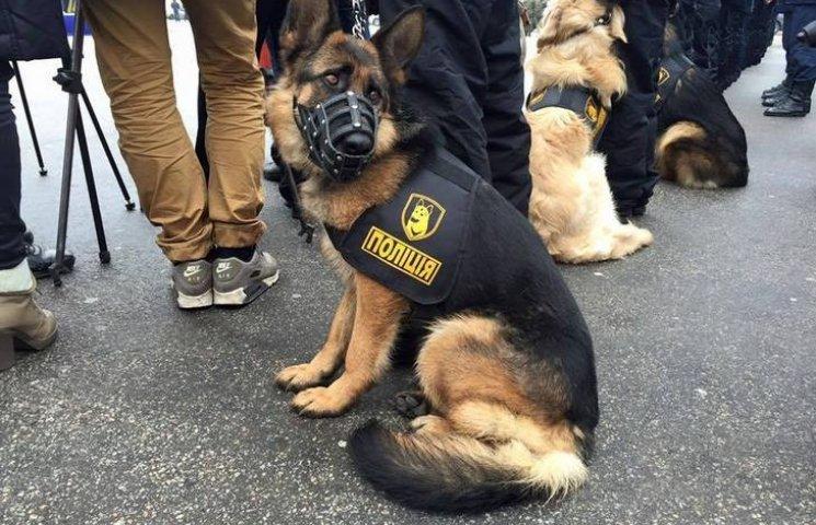В Україні створили форму для поліцейських... собак
