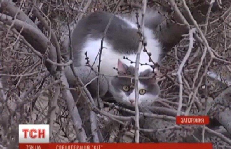 У Запоріжжі операція з порятунку кішки тривала три доби