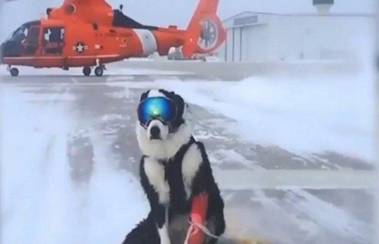У Мічиганському аеропорту за розгін птахів зі злітної смуги відповідає пес