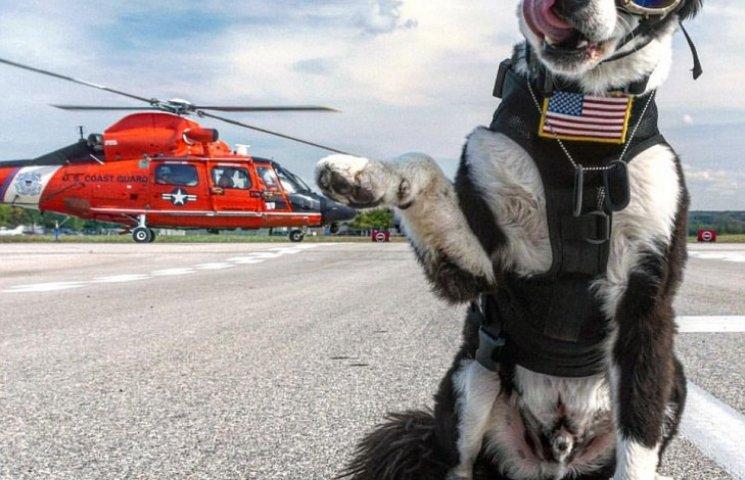Як собака працює в аеропорту на злітній смузі