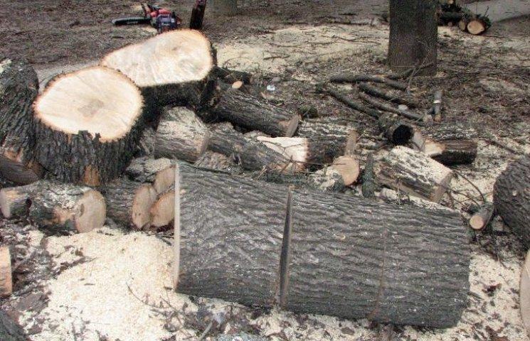 У Миколаєві продовжують пиляти на дрова здорові дерева