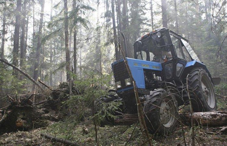 Під час лісозаготівлі на Сумщині деревом вбило тракториста