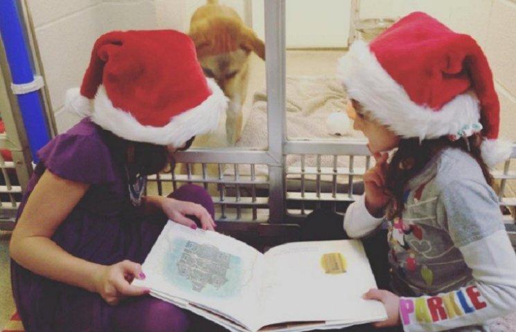 Как дети читали книжки застенчивым щенкам