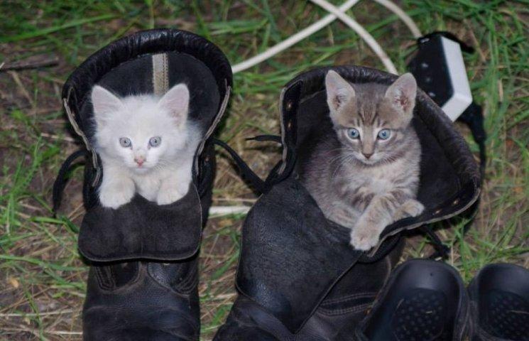 До Міжнародного дня котів: мурчики, що рятують Україну